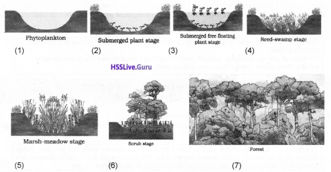 Plus Two Botany Notes Chapter 7 Ecosystem 7