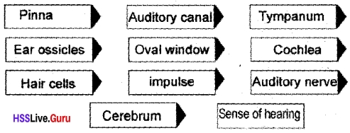 Kerala Syllabus 10th Standard Biology Solutions Chapter 2 Windows of Knowledge - 52