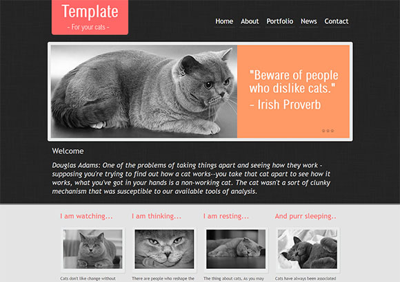 CatTemplate Html5 Theme