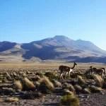 Agencias de Viajes en todo Ayacucho pampa galeras