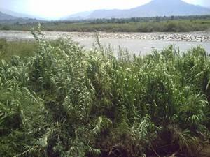Ribera del rio Chancay
