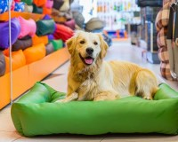 Top 5 Best Indestructible Dog Bed Reviews in 2017
