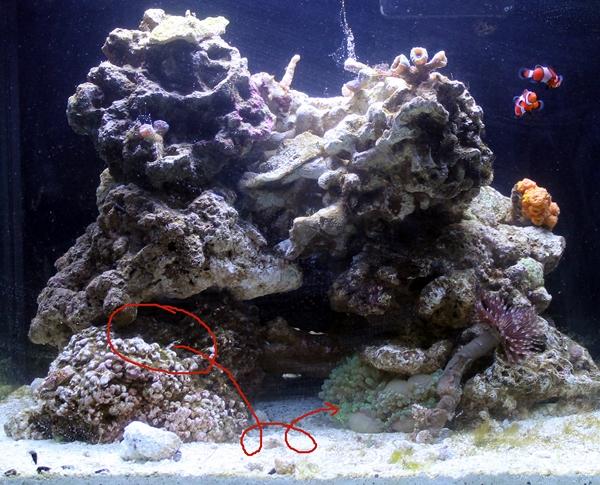 2015-01-09 fish 21 anemone journey