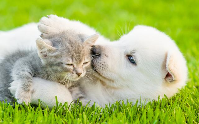 playful puppies kittens wellness
