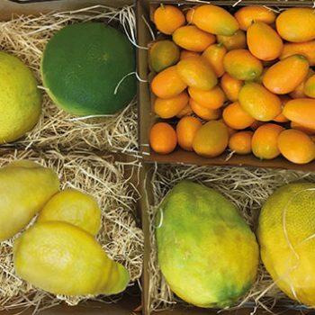 citrus_03