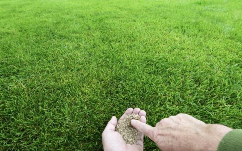 plantar cesped en jardin