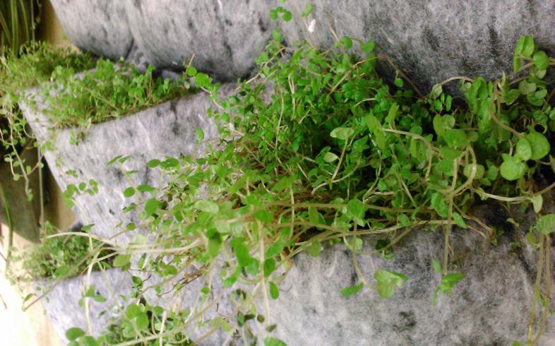 riego en cultivo vertical
