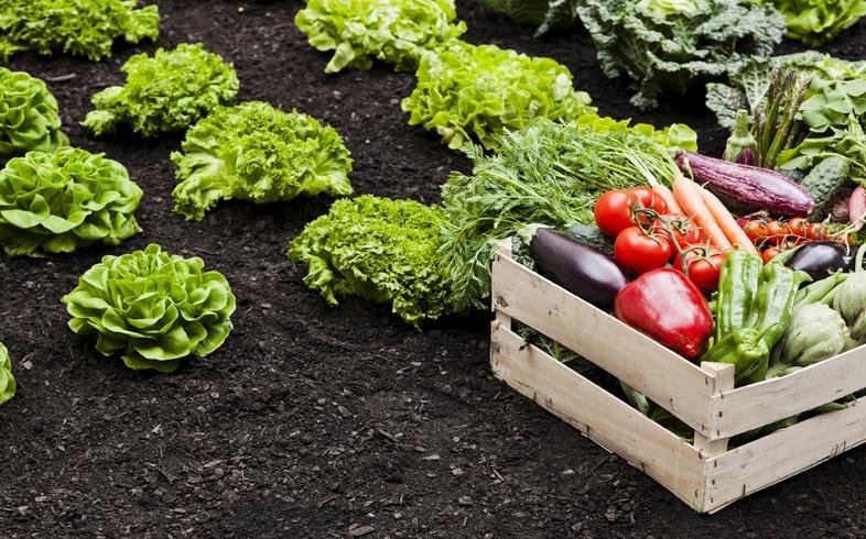 mejores hortalizas segun region