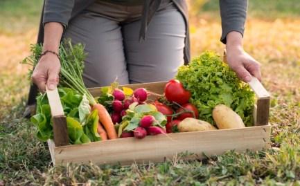top 5 hortalizas en huerto urbano