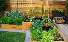consejos para cultivo en huerto urbano