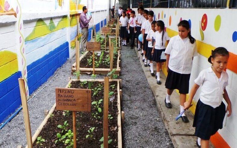 huerto urbano en escuelas