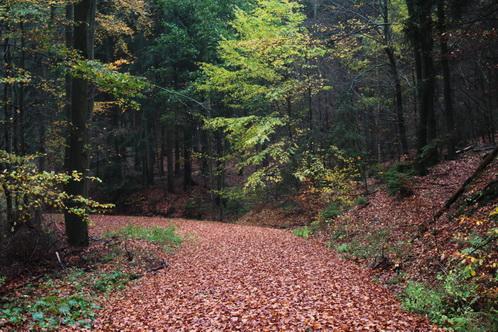 Im Regen im Herbstwald 8714