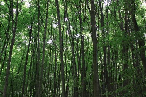 Durch den Wald 5689