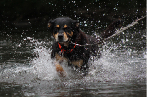 Bex im Fluss