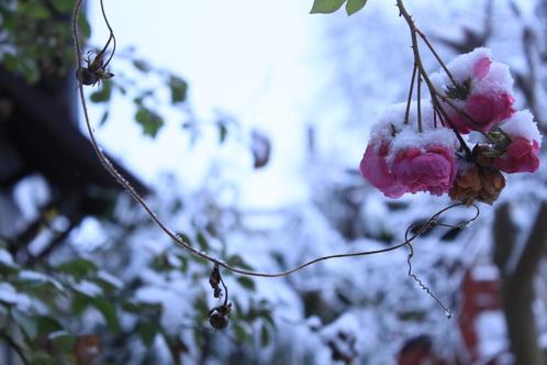 Schnee im Garten 9855