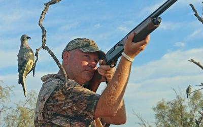 Dove Hunting Simple Tips