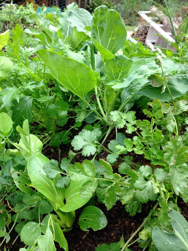 garden-greens