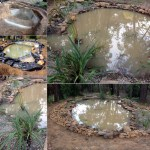 turtle pond construction