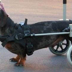Wheelchair Dog Hooker Furniture Dining Chairs Huggiecart Image320