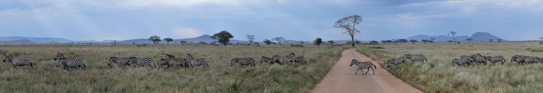 Zebra Crossing the Road, Pundamalia