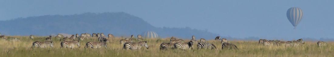 Balloons Over Zebra in the Serengeti