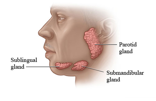 Saliva is produced in 3 types of glands in your mouth.