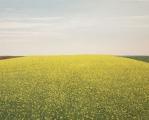 """<h5>Colza aux Cirrus</h5><p>Oil on canvas, 47 ¼ x 59"""" (120 x 150cm)</p>"""