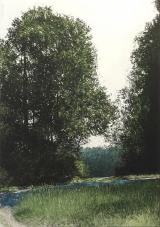 """<h5>Lumière D'été</h5><p>Oil on canvas, 43"""" x 31½"""" (110 x 80cm)</p>"""