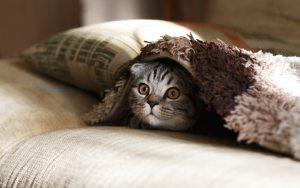 Katje verstopt onder pluizige deken