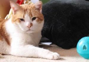 kattenspeeltjes