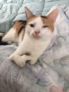 kat met handicap
