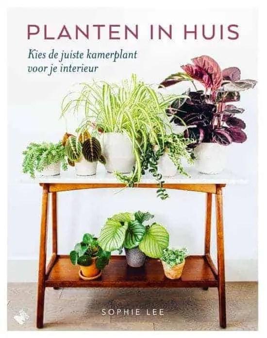 Kamerplanten kiezen  Huisvlijt