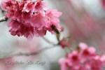 ハワイ島フォト日記 春一番?冬の嵐が過ぎると一気に春が!!!