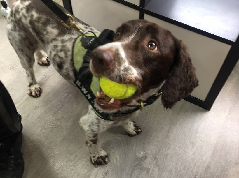 Scamp the sniffer dog who helped uncover a haul of illegal tobacco worth £11,000.