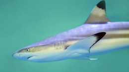 An interactive shark senses workshop will take place at The Deep. Picture: David Clode