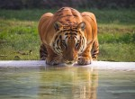 The Wildlife Photographer Of The Year exhibition is back in Beverley. Picture: Ratanjot Singh