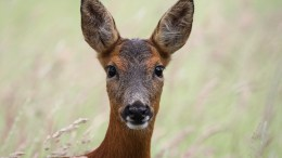 Deer. Photo by Gary McLeod.