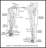 أعضاء جسم الانسان بالغة الانجليزيه