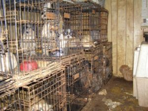 Puppy Mills Commercial and Backyard Dog Breeders