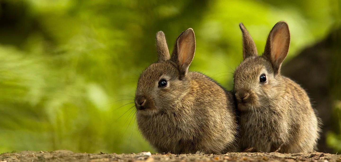 rabbits the humane society