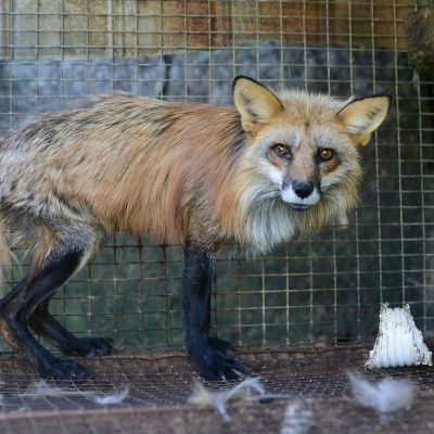 going fur free the