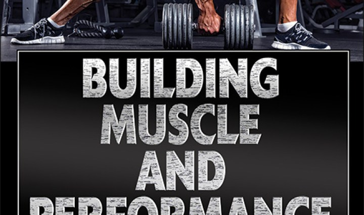muscle archives | human kinetics sport, health & fitness blog, Muscles
