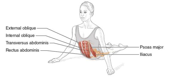 Dance Anatomy, Second Edition: Abdominal stretch demonstrated