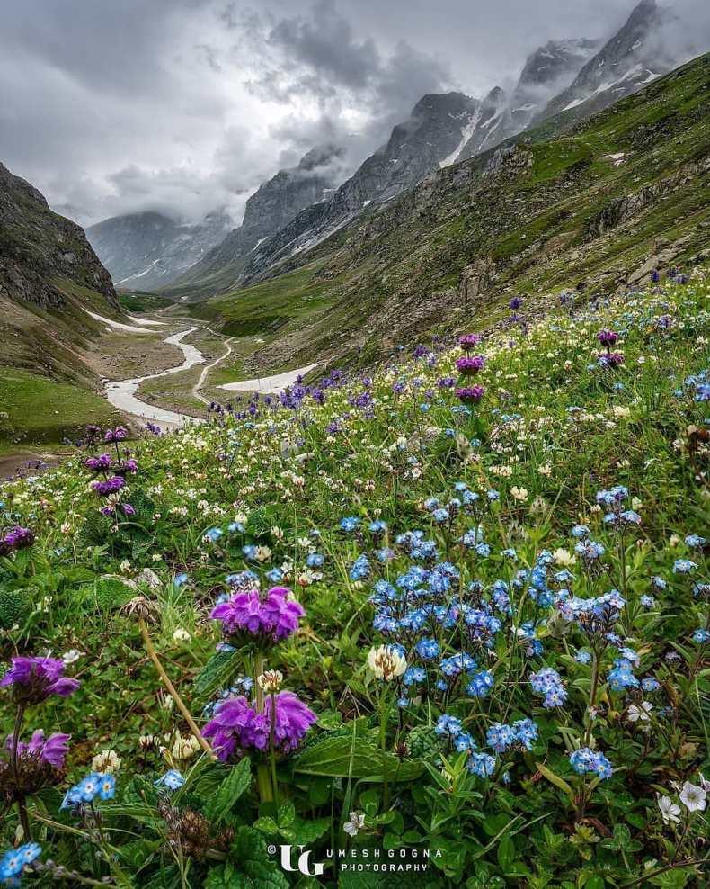 Chamoli Valley of Flowers