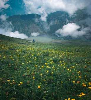 10 Famous Ayurvedic Herb of Uttarakhand