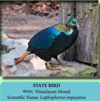 State Bird Of Uttarakhand Monal