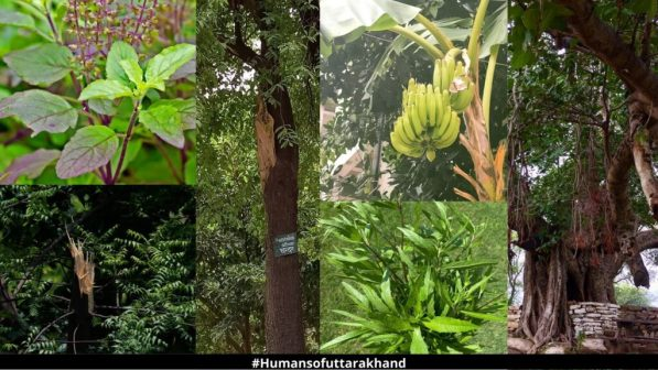 Major plants related to Our life