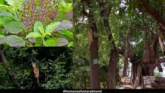 importance of trees in Hindu religion