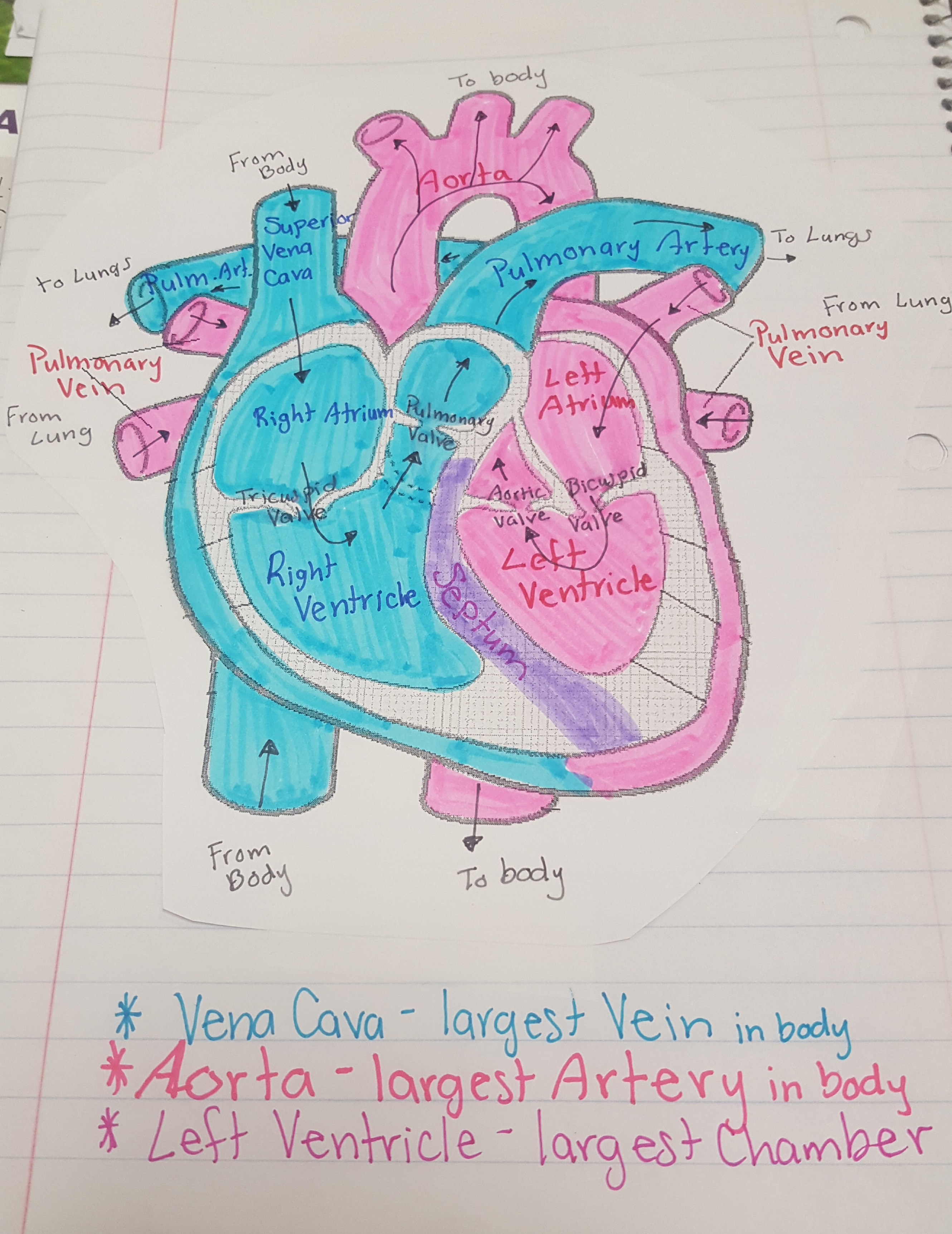 heart diagram quiz games of mouth with teeth numbers biology notes and helpful documents