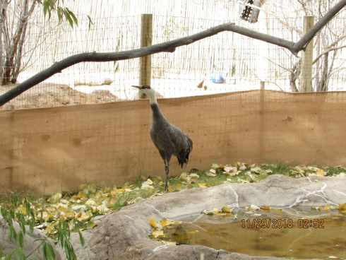 el paso zoo crane